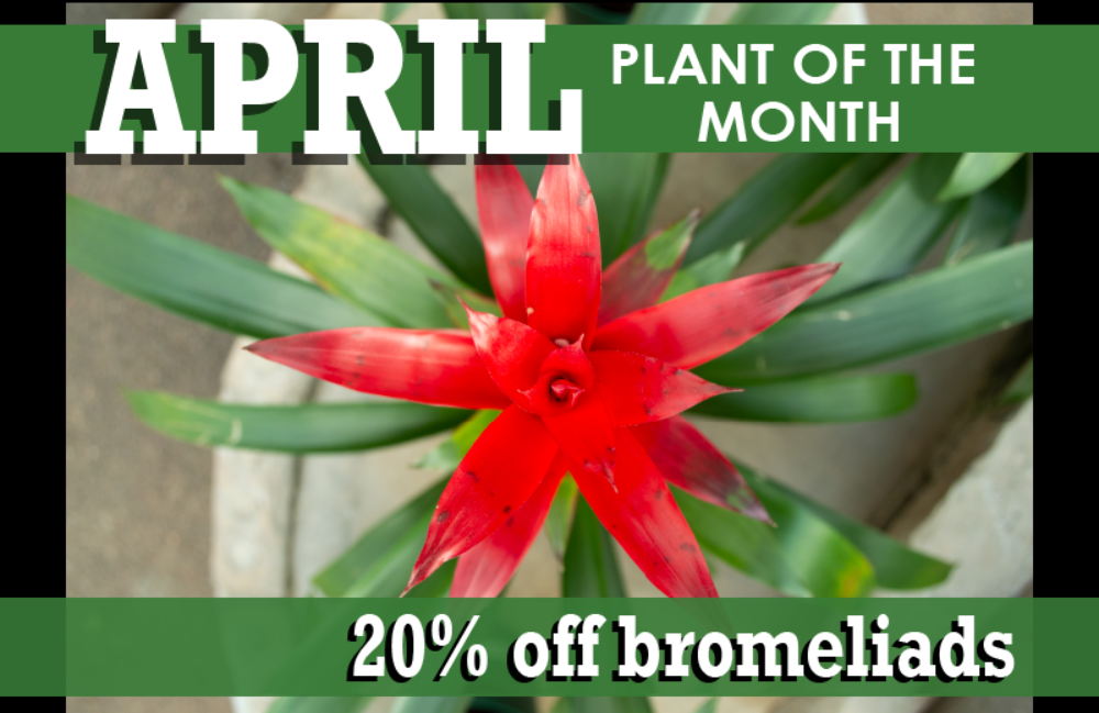 April Plantof Month