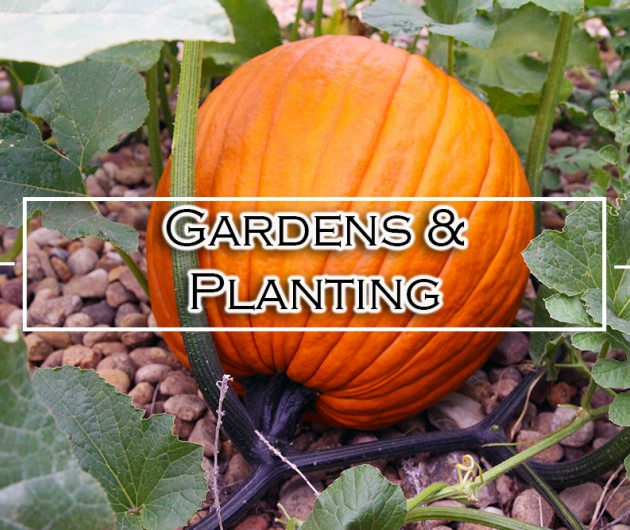 Gardens and Planting