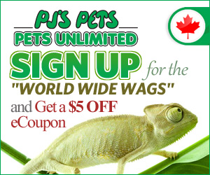 PJ's Pets World Wide Wags eNewsletter