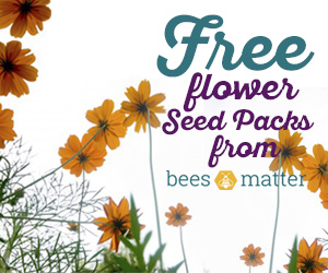Free Flower Seed Packs from Bees Matter