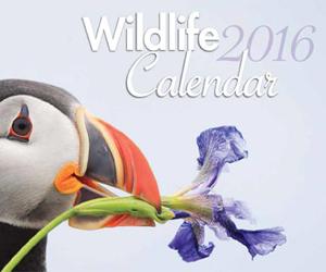 2016 Wildlife Calendar