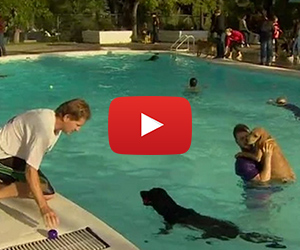 Doggy Day At A Public Pool is Adorable