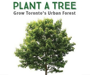 Free Trees from Toronto Parks and Trees