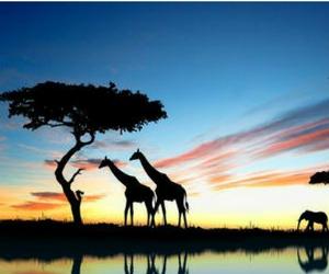 Win 1 of 3 Family Safari Adventures