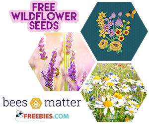 Free Seed Packet From Bees Matter