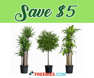 Save $5 on Tropical Plants at Home Depot