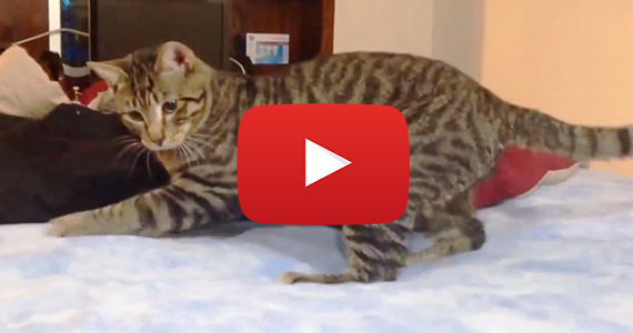 Cats Are Confused By Waterbeds