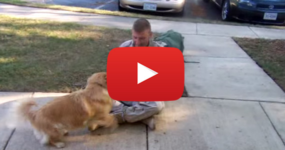 Dog Welcomes Back Soldier – So Happy
