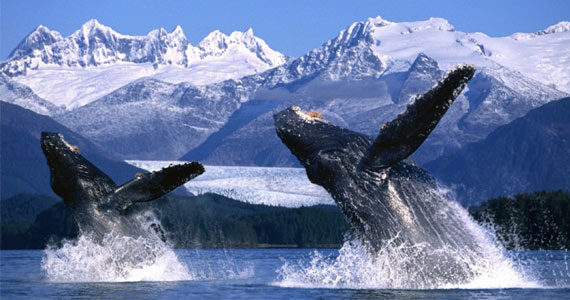 Win an Alaska Land & Sea Journey For 2