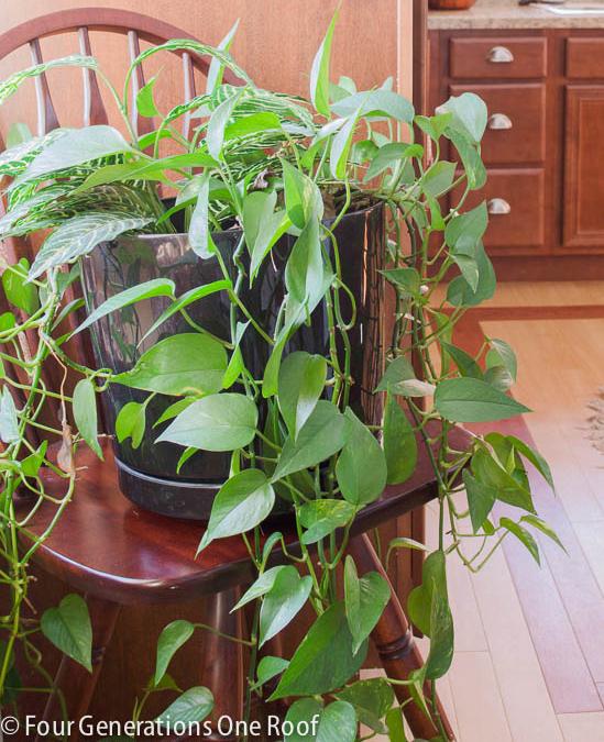 plante-5