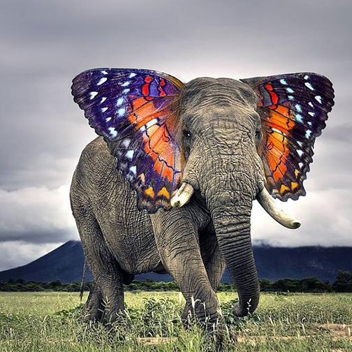 animaux-elephant-504