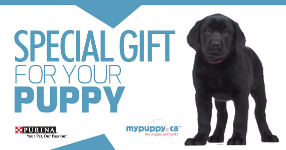 Special Gift for your Puppy