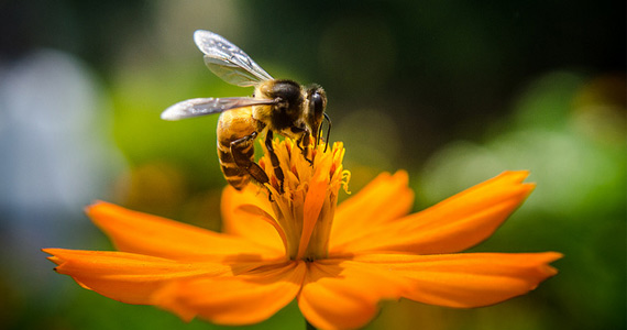 Free Flower Seeds From Bees Matter