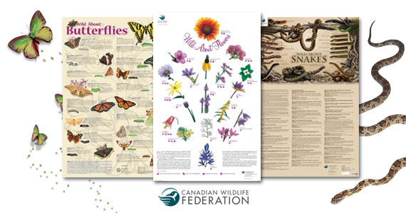 Free Wild About Posters from Canadian Wildlife Federation