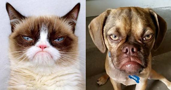 Grumpy Cat – Meet Grumpy Dog