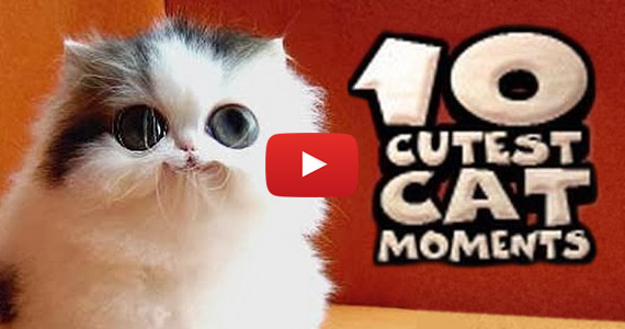 Top 10 Cutest Cat Moments Caught on Camera