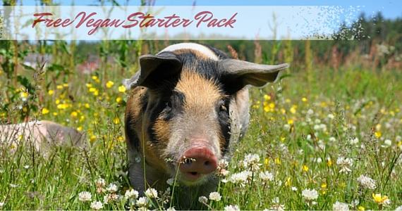 Free Vegan Starter Pack