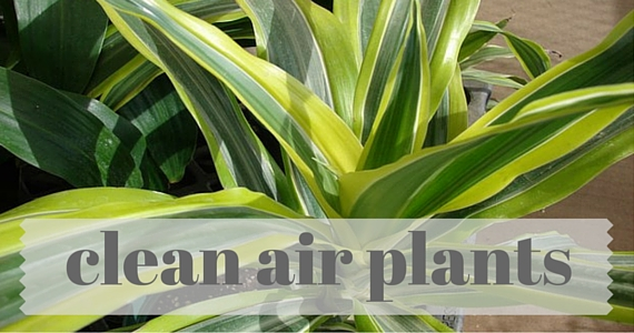 Best House Plants for Clean Air