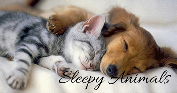Sleepy Animals That Win the Internet