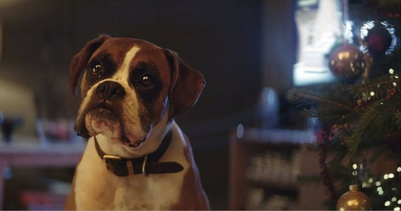 Have You Seen The John Lewis Christmas Advert of 2016?