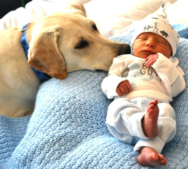dogs-cuddling-with-babies-11