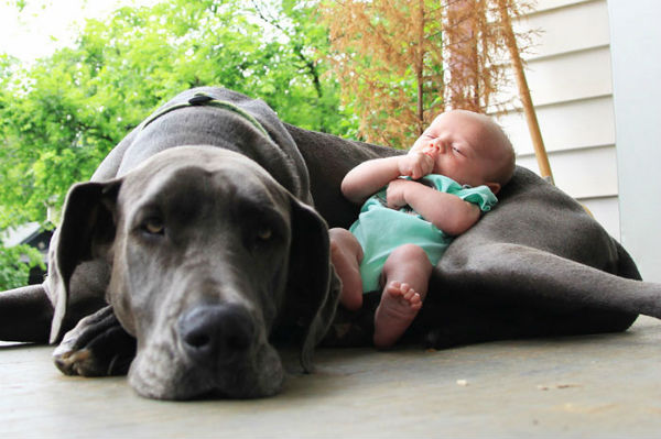dogs-cuddling-with-babies-7