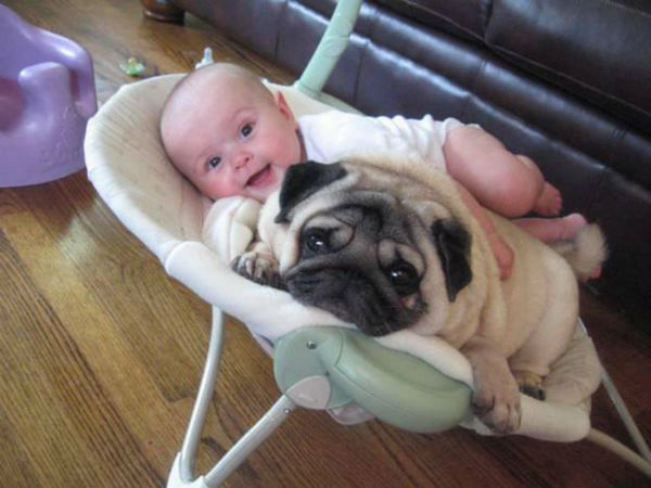 dogs-cuddling-with-babies-8