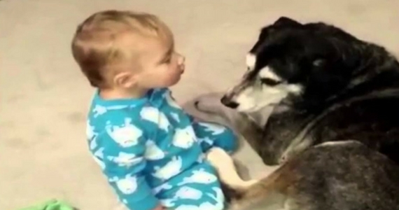 If You Think Dogs Shouldn't Be Allowed Near Babies, You Need to See this Video