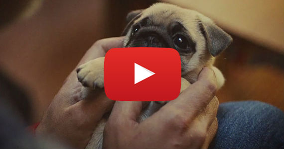 Pin Funny Animal Song On Pinterest