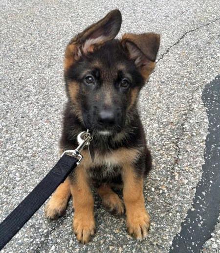 puppypetsblog