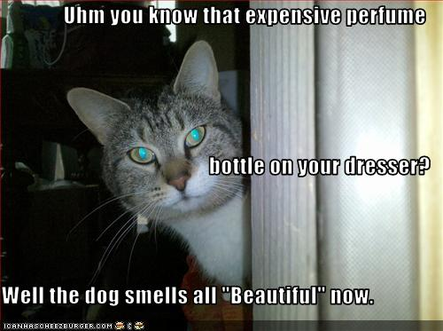 67599_funny-pictures-cat-spilled-perfume