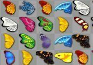 La búsqueda de las mariposas