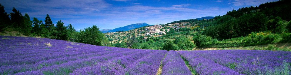 Avignon   Provence Lavender Tour