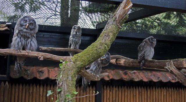 Wist je dat er in de Uilentuin meer dan 20 uilen te zien zijn!