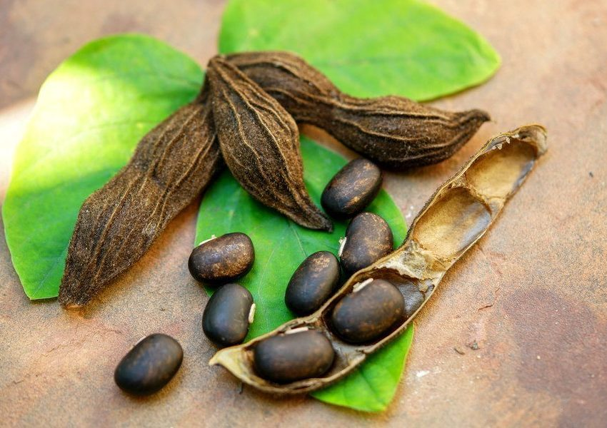 Мукуна жгучая семена купить недорого