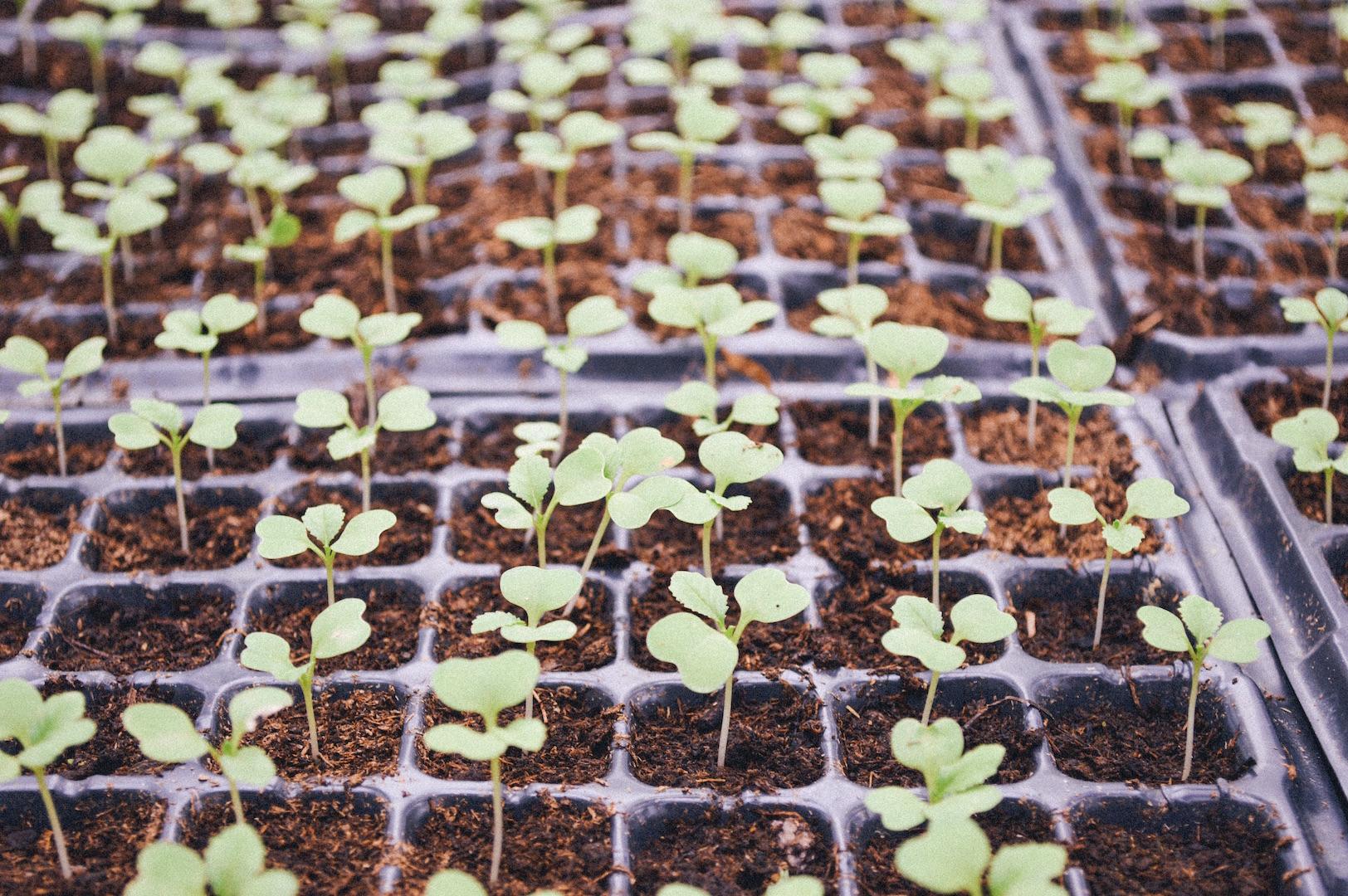 8 цветочных культур, которые сеют на 92