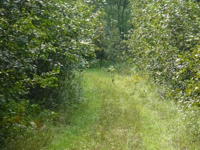 Menominee MI Residential Lots & Land For Sale: $75,000
