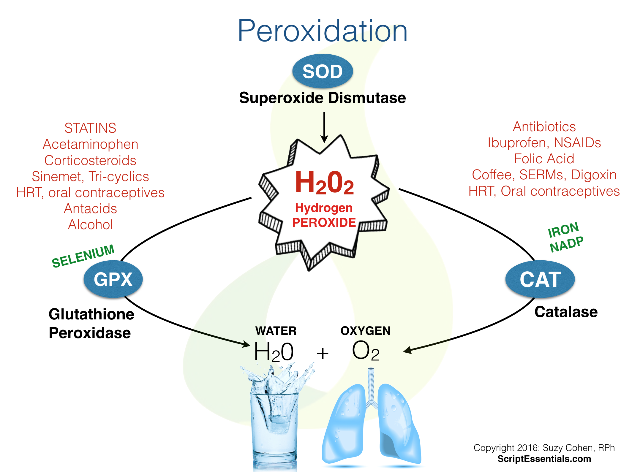 Effect of Hydrogen Peroxide Concentration on Enzyme Catalase Essay