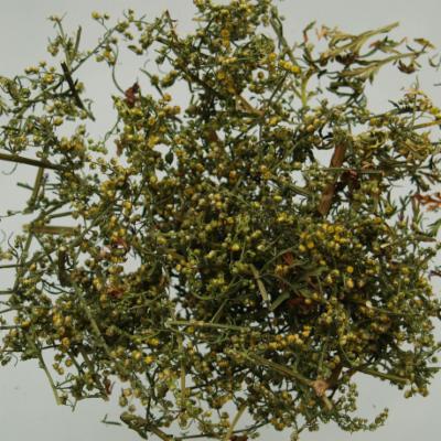 Artemisia annua dried