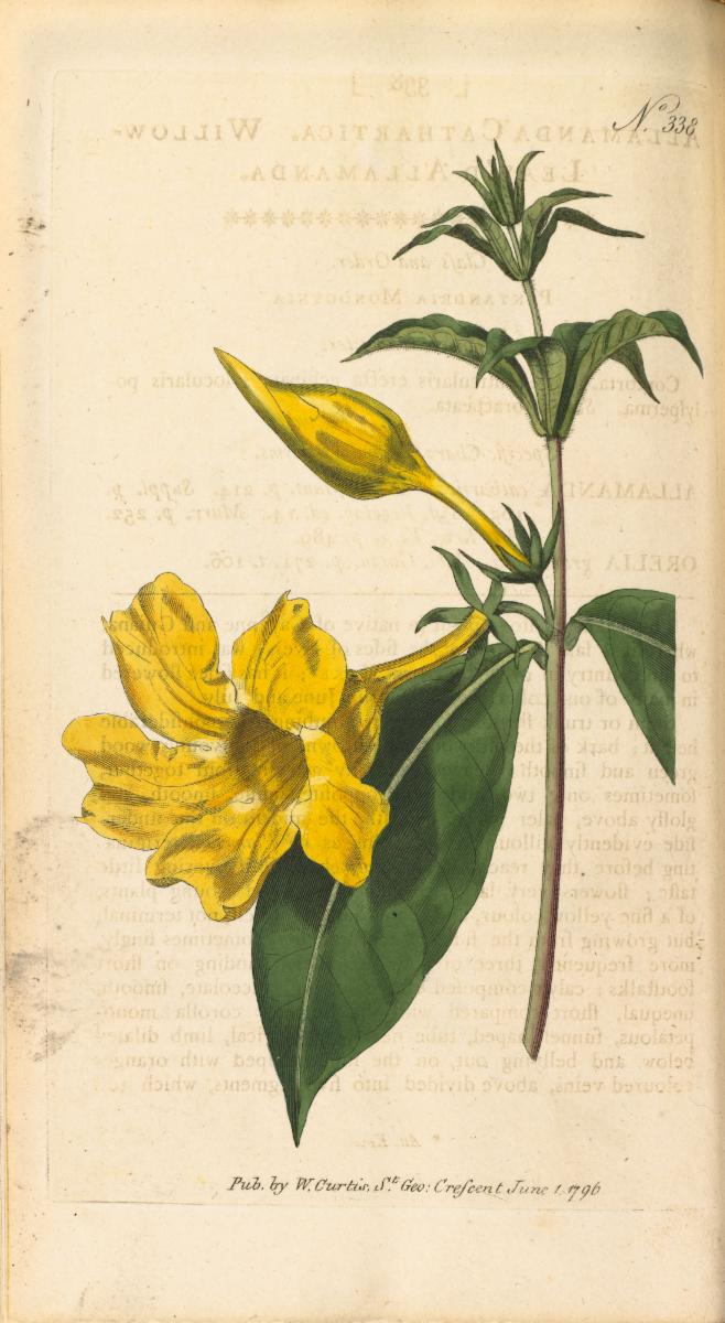 Allamanda Cathartica L Plants Of The World Online Kew Science