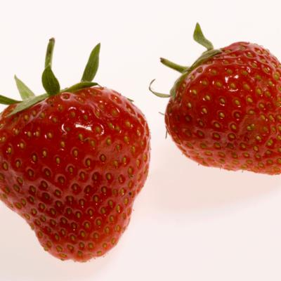 Potentilla ananassa (commercial strawberries)