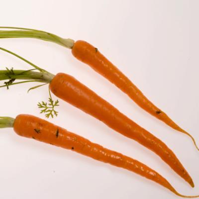 Daucus carota (wild carrot) orange taproots