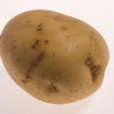 Solanum tuberosum (potato)