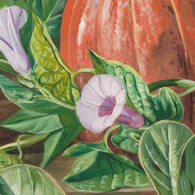 Ipomoea batatas (sweet potato)