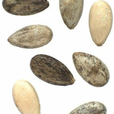 Citrullus lanatus (watermelon) seeds