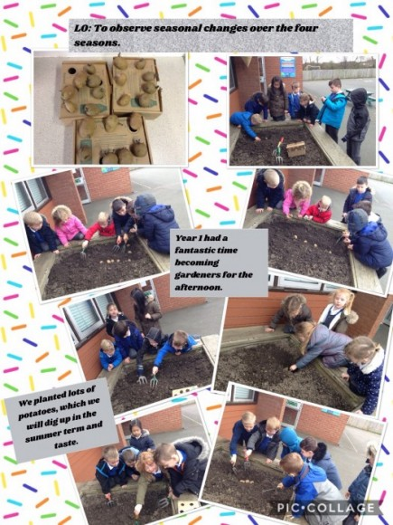 Year 1 had a great afternoon planting potatoes as part of our science topic - observing seasonal changes across the four seasons. We are looking forward to digging up and tasting the potatoes during the summer term.