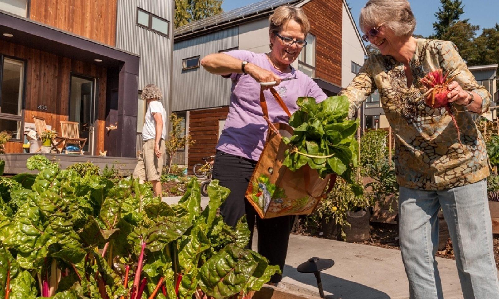 Grow Village Gardenharvest © Grow Community