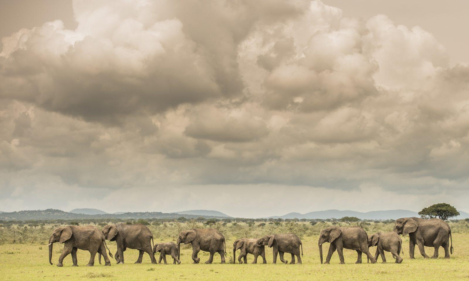 Singita Serengeti House Wildlife1