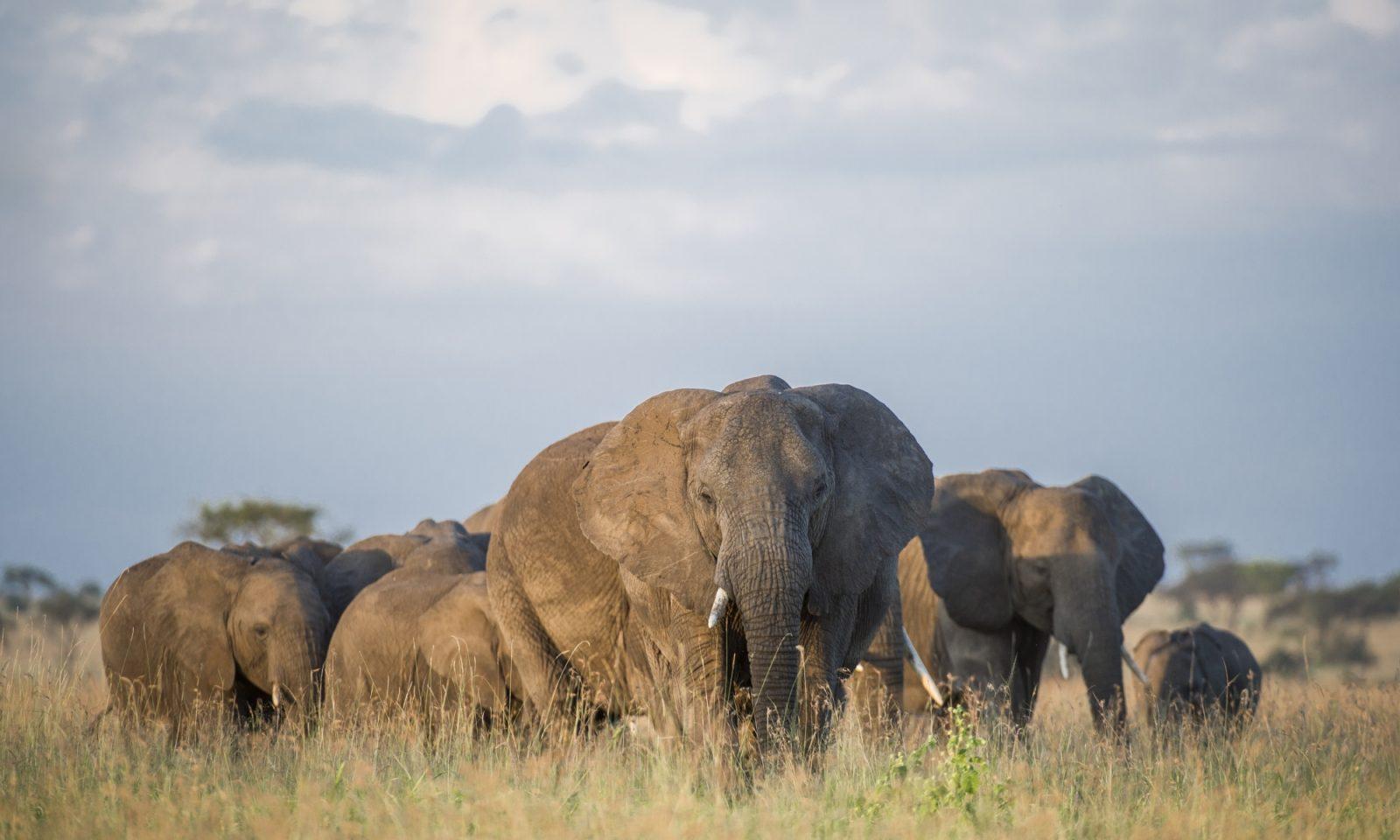 Singita Serengeti OPAP Mike Sutherland