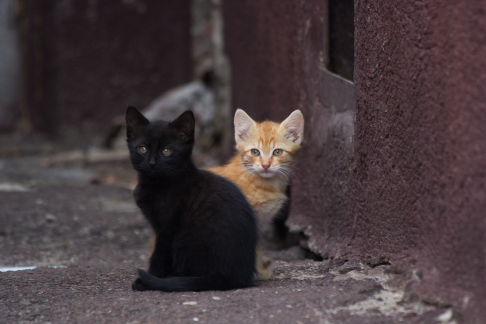 One black kitten and one ginger kitten sit in the street